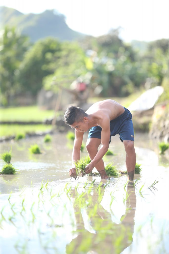 Young man planting rice